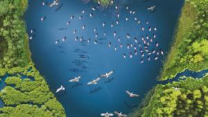 Na zdjęciu: plakat promujący Światowy Dzień Mokradeł