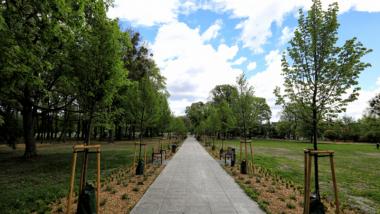 Na zdjęciu: alejka w zrewitalizowanym Parku Glazja
