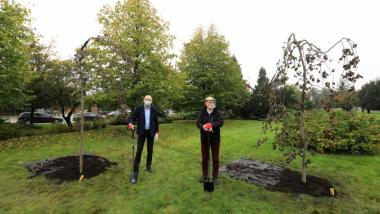 Prezydent michał Zaleski i poseł Robert Kwiatkowski stoją oparci o łopaty przy posadzonych przez siebie bukach.