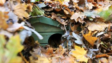Pod stertą jesiennych liści widać drewnianą budkę dla jeży