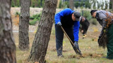 Dwóch pracowników wkopuje małą sadzonkę drzewa