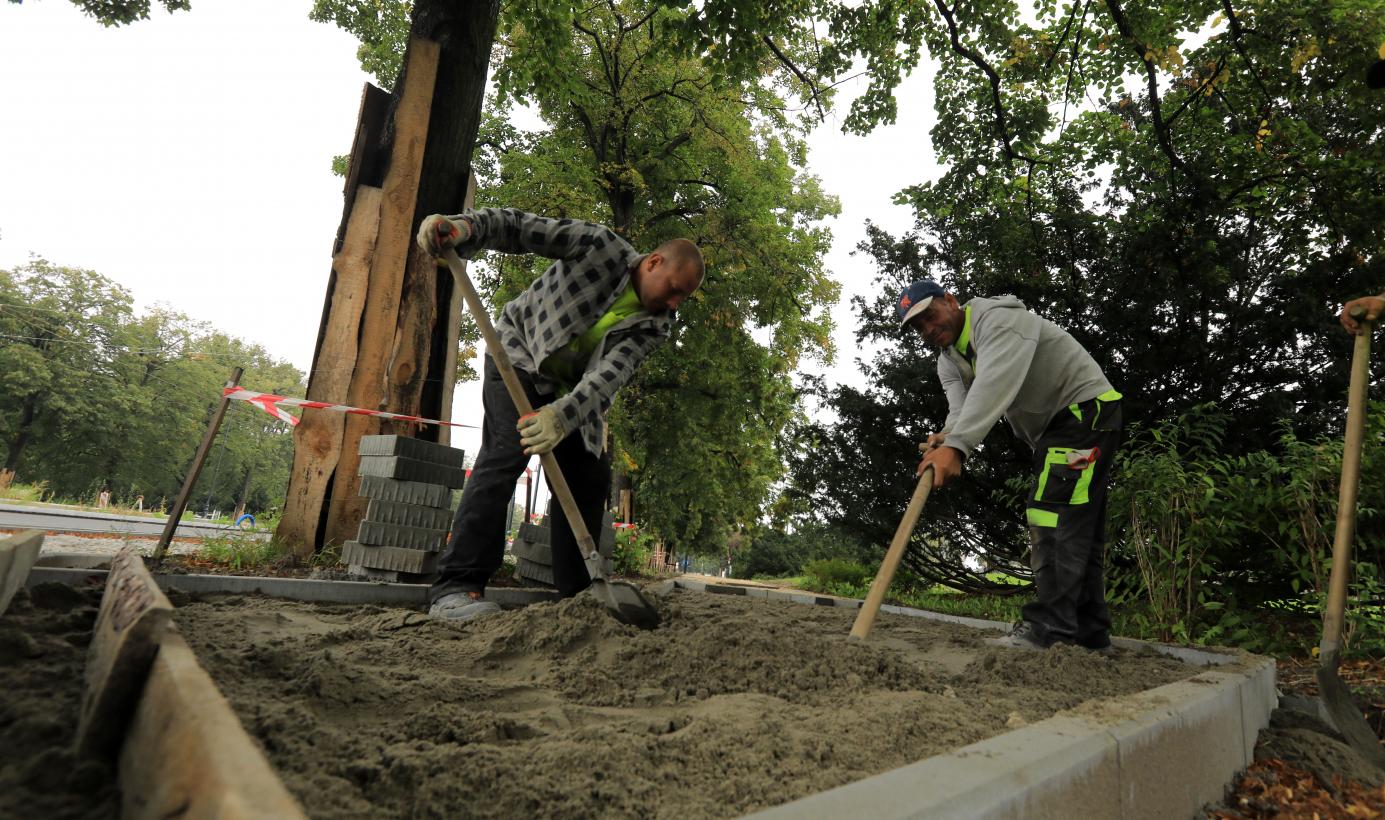 Dwaj robotnicy wyrównują łopatami podsypkę pod chodnik pod drzewem